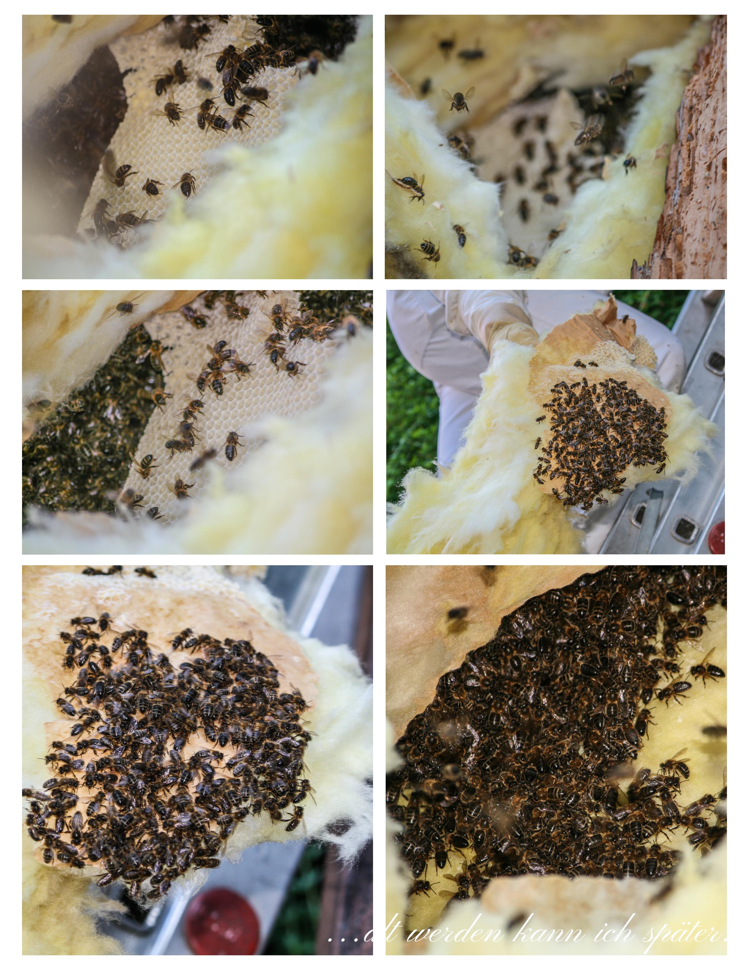 Wann Schwärmen Bienen